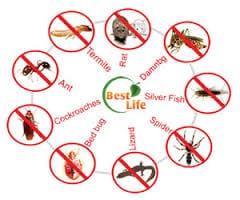 شركة مكافحة حشرات بالقطيف بالمنطقة الشرقية